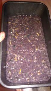 purple corn flour zuchinni bread