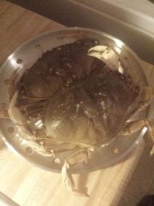 live crab