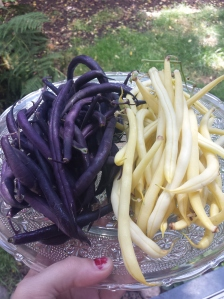purple green beans and yellow wax beans