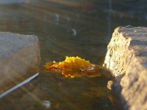 Light hitting found flower in water