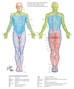 06-4 Radiculopathy